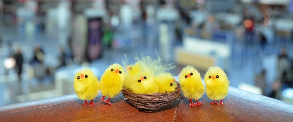 Yellow easter chicks on table.